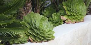 Landscaping Details - Succulent